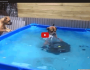 These Dogs Work Together To Pull This Tire Out Of APool