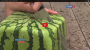 Square Watermelons Take Japan ByStorm