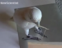 Cockatoos can learn from each other how to make and use tools