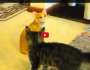 Cat vs statue
