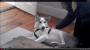 "Siberian Husky says  ""no"" :)"