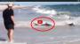 Rare Shark Feeding Frenzy in NorthCarolina