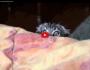 Horror movie cat:)