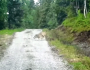 Sheep Run Off Wolf That Tries To Hurt Them