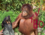 """Android's """"Friends Furever"""" Ad Proves Even The Unlikeliest Of Animals Can BecomeFriends"""