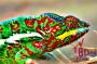 How Do Chameleons ChangeColor?