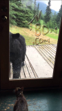 Cat Scares Off Bear Peaking Through Glass Door