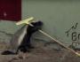 Honey Badger Houdini – Honey Badgers: Masters ofMayhem