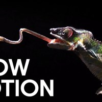 Deadly Animal Attacks in Slow Motion